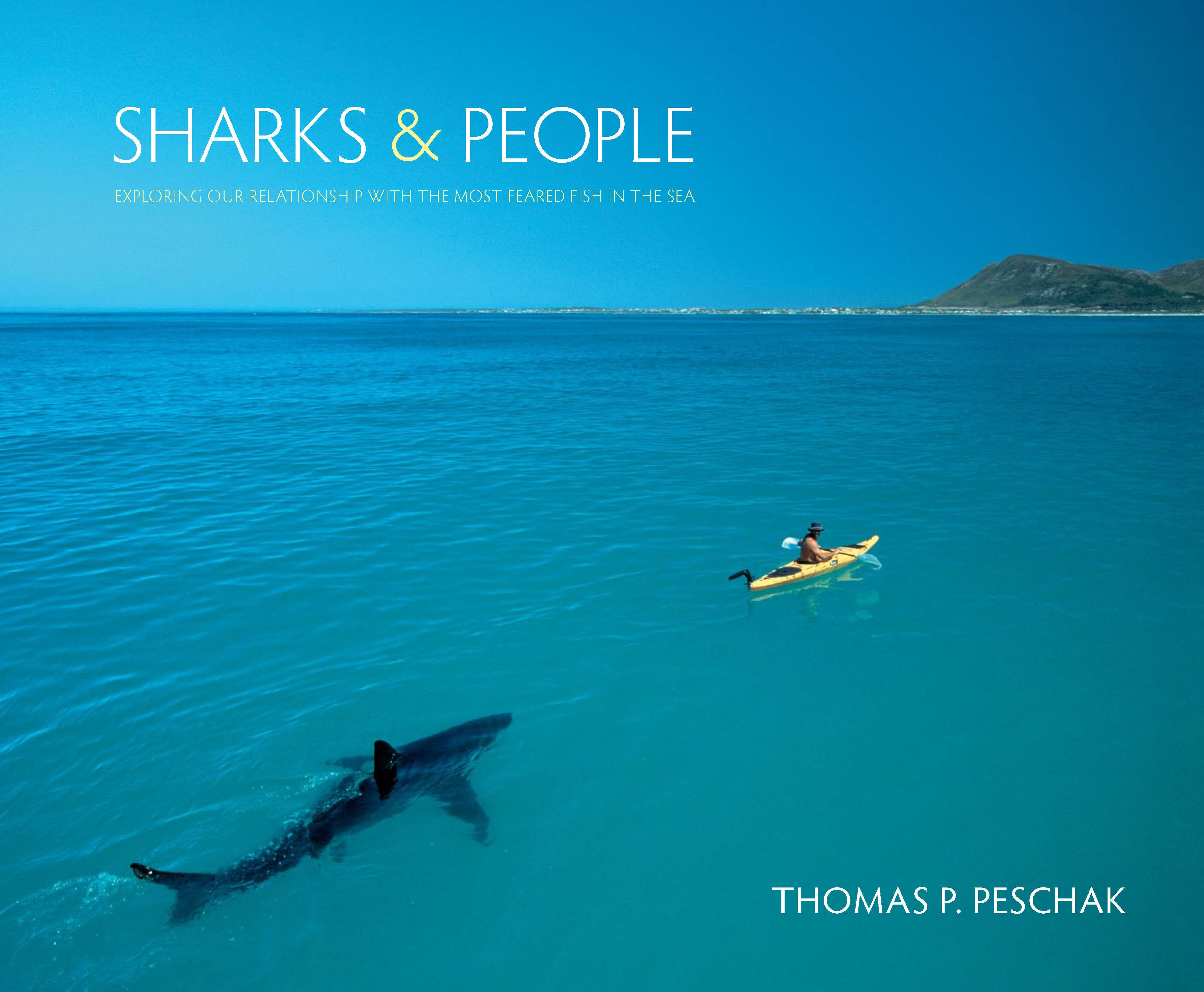 Image result for sharks and people