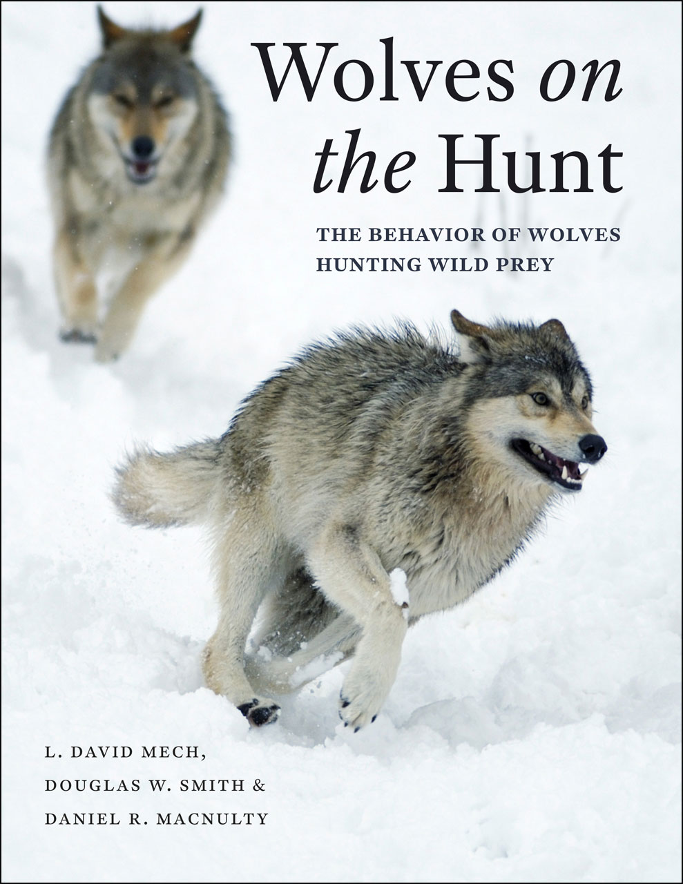 an introduction to the nature of the wolves Wolves in yellowstone national park were restored in 1995 nature greater yellowstone ecosystem introduction.