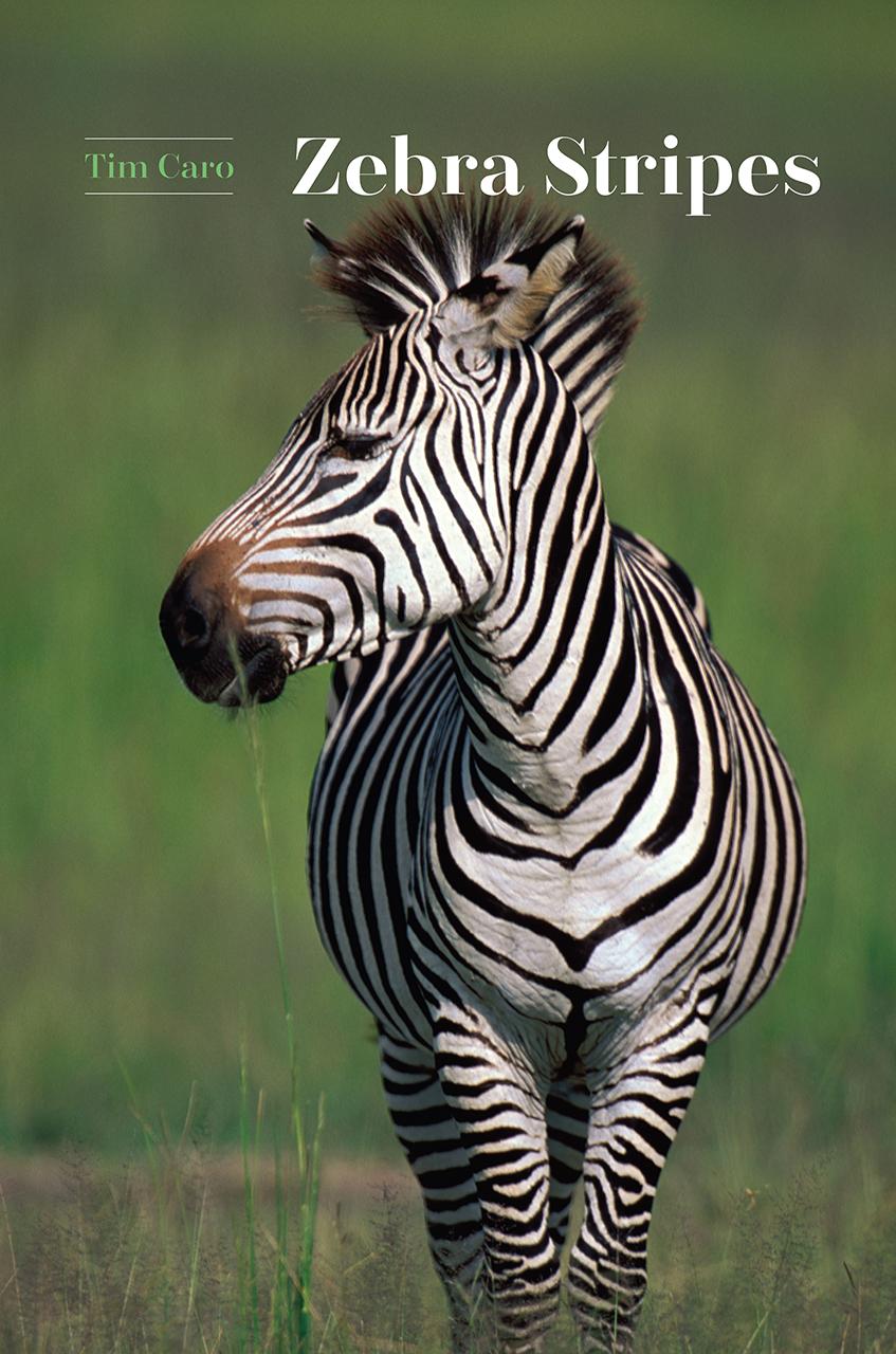zebra stripes caro