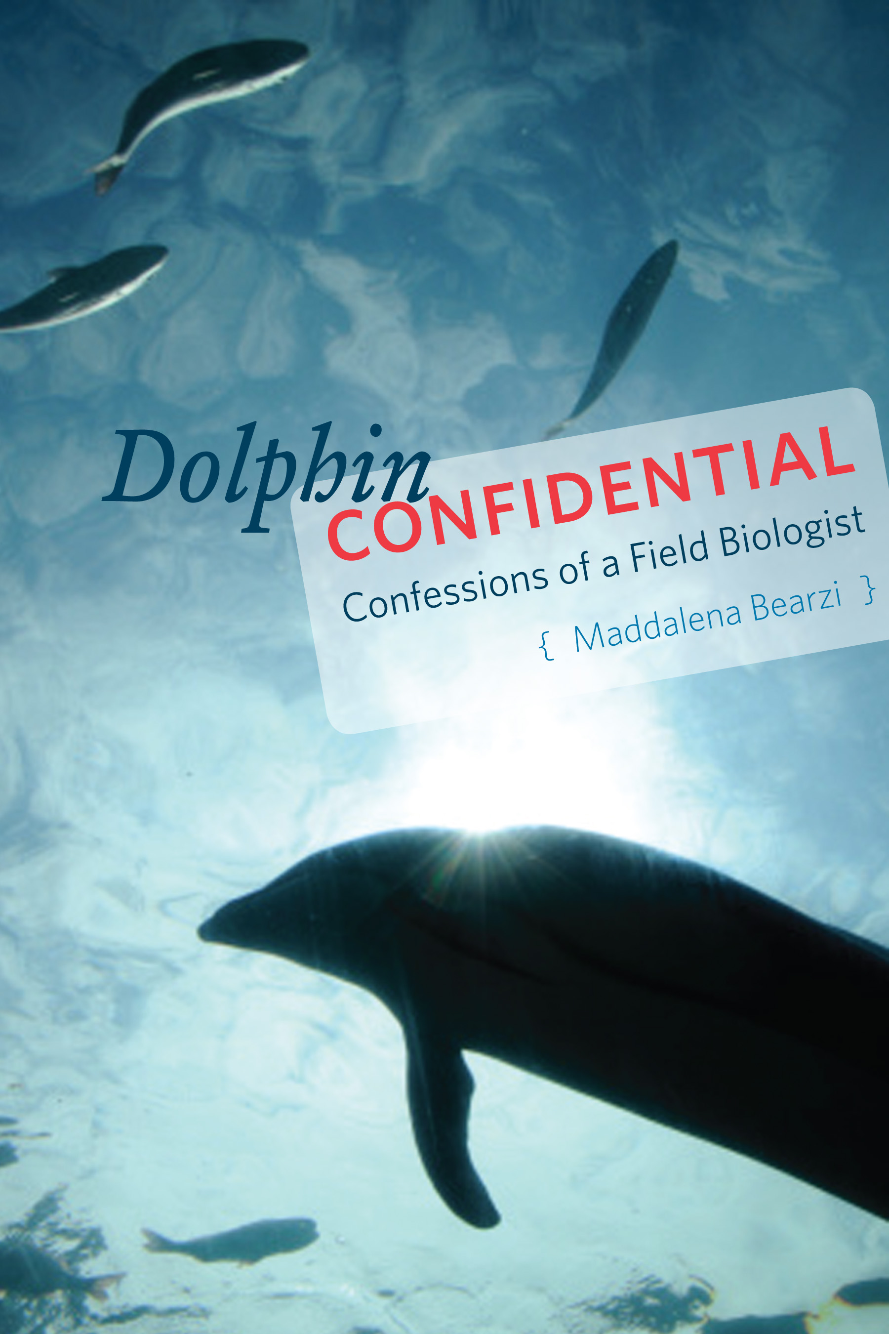 dolphin confidential confessions of a field biologist bearzi