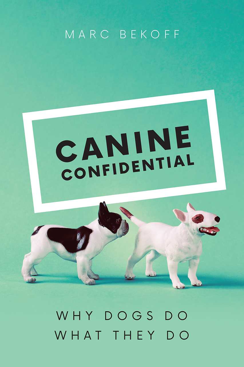 What Do You Need For Full Face Makeup: Canine Confidential: Why Dogs Do What They Do, Bekoff