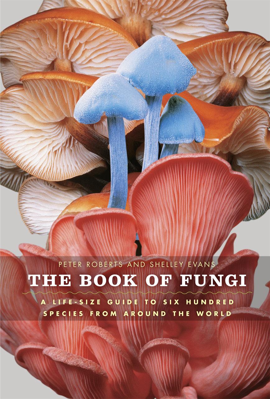 Kingdom fungi pdf