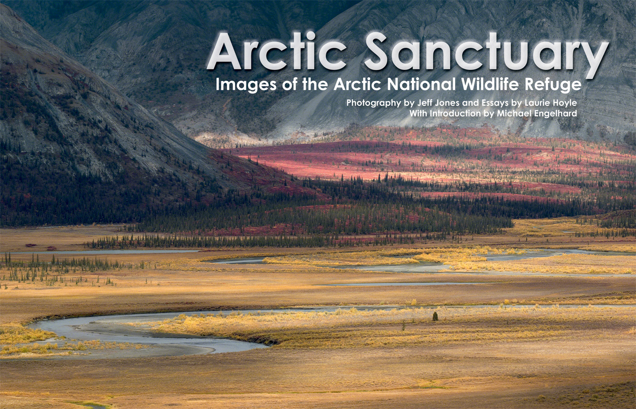 essay arctic national wildlife refuge Should the arctic national wildlife refuge be opened to oil drilling in a nutshell yes no the proceeds from drilling could dramatically lower the price of oil.