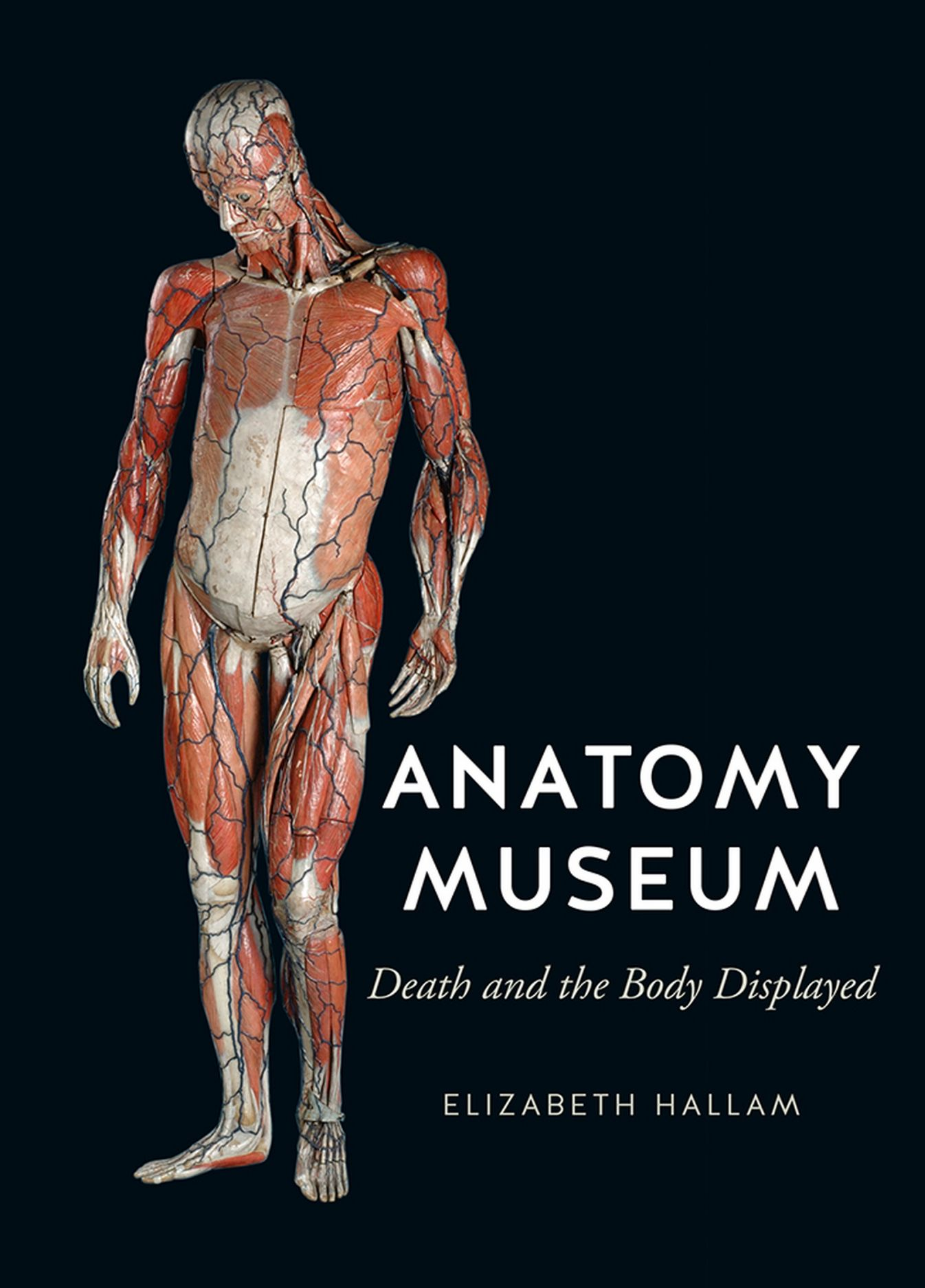 Anatomy Museum Death And The Body Displayed Hallam