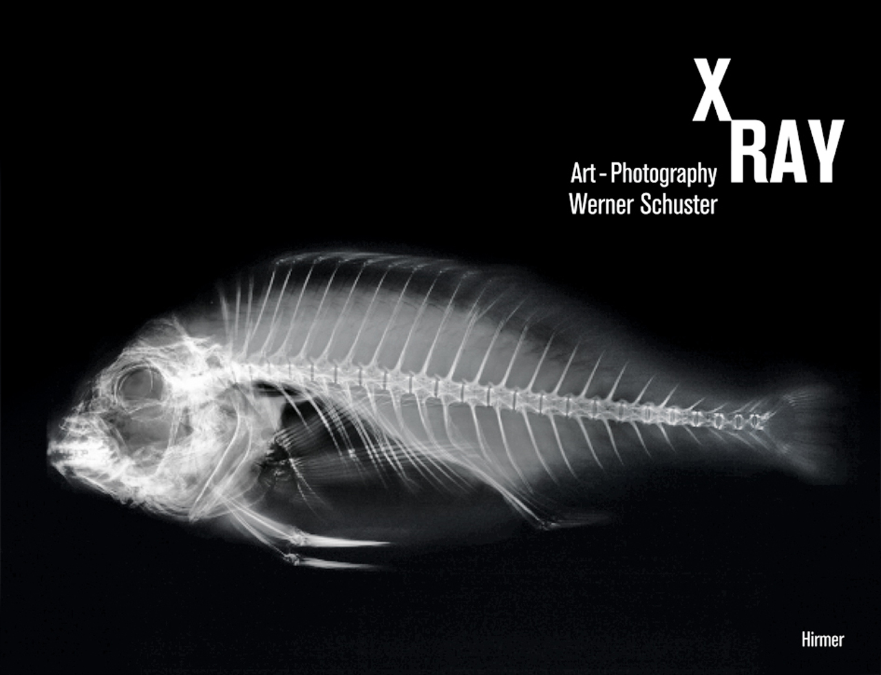 X ray art photography schuster harather for X ray painting