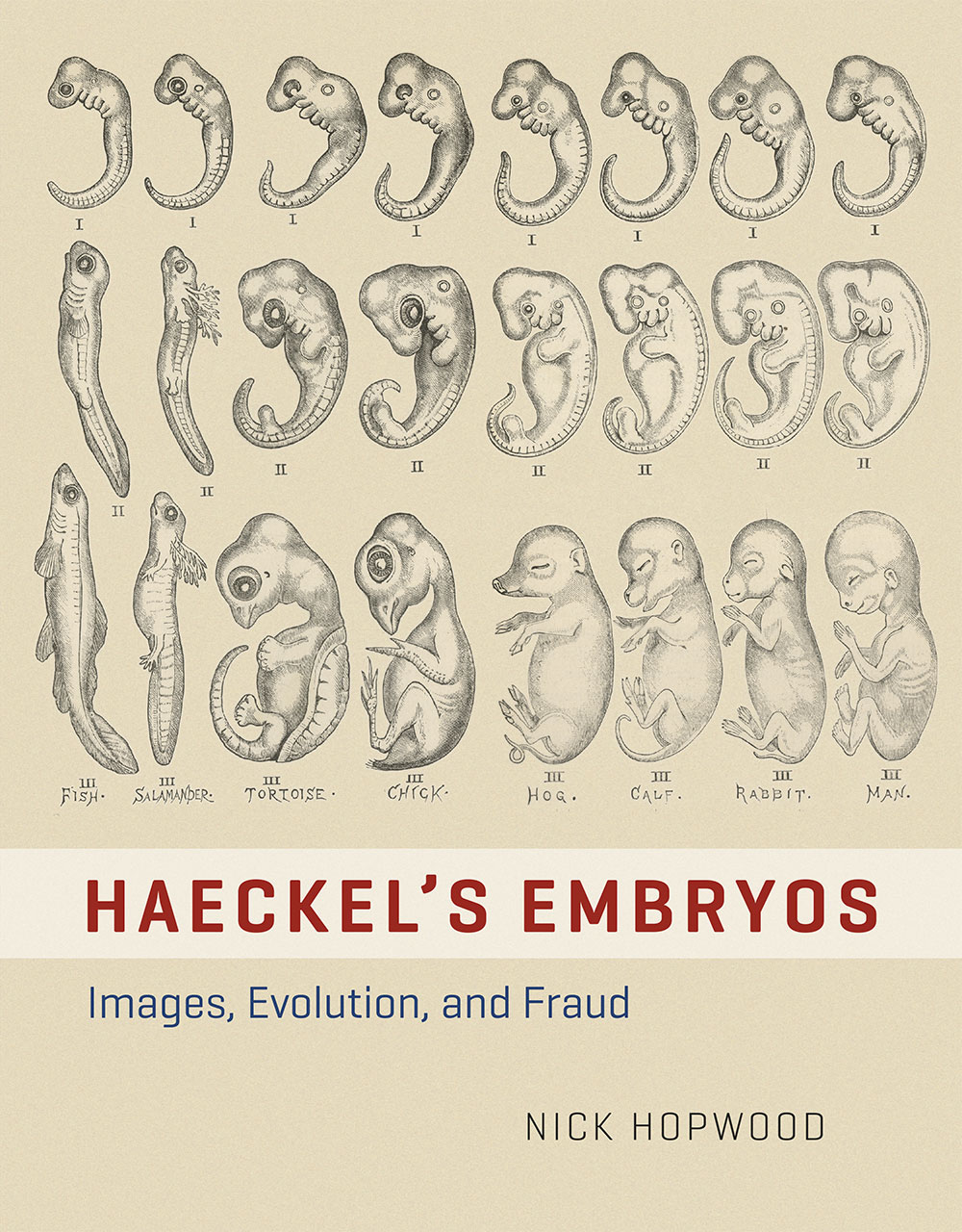 Haeckel S Embryos Images Evolution And Fraud Hopwood