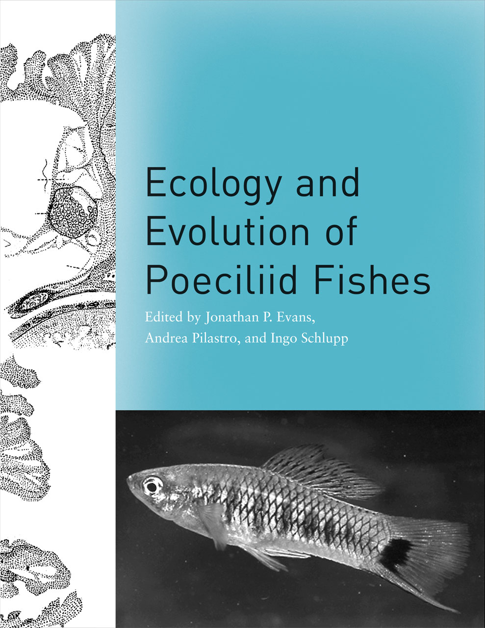 Ecology And Evolution Of Poeciliid Fishes Evans Pilastro