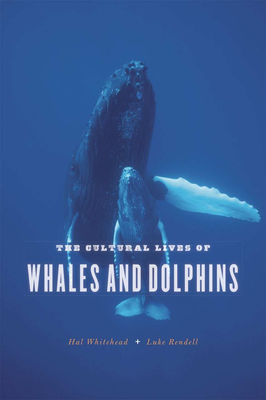 The Cultural Lives Of Whales And Dolphins Whitehead Rendell