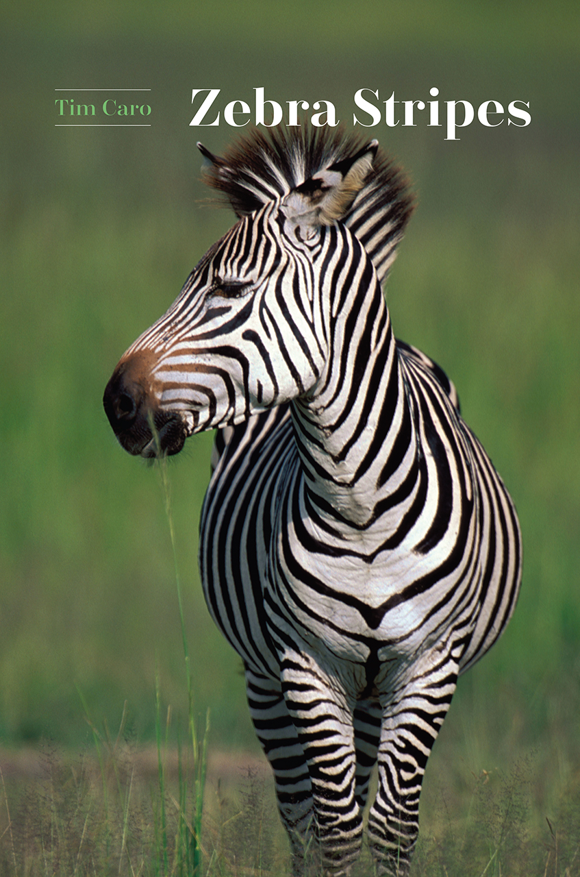 Zebra Stripes Caro