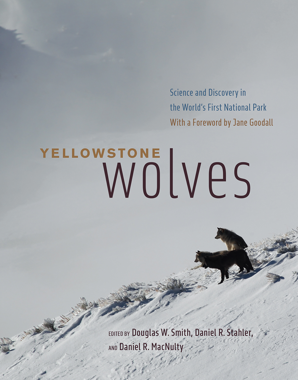 Yellowstone Wolves: Science And Discovery In The World's First National  Park, Smith, Stahler, MacNulty